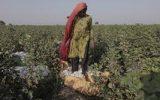 نقش زنان در توسعه پایدار و مدیریت صحیح آب و خاک