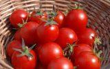 تولید لباس با پوست گوجه فرنگی!