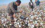 قاچاق پوشاک تولید پنبه را به رکود کشاند